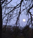 Chantilly Moonrise