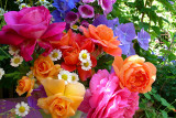 Yves Piaget, Golden Celebration, Pat Austin, Hydrangea.....