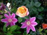 My Garden: A Gardener's Galleries