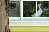Window with Goose