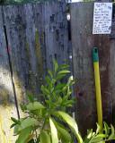 Public Creativity: Do Not Roll Quietly Through The Grass....