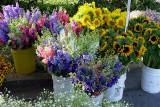 Marin County Farmer's Market
