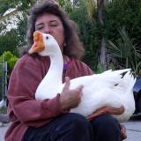 Joanne Perez, the Cascade Drive Goose Woman