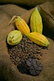 Cacao Still Life-3
