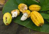 Cacao Still Life-1