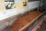 12072006-La Luz Cacao Plantation-Z-030