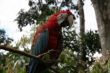 Macaws are the largest birds in the parrot family