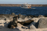 sealions and our boat in the background