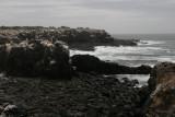 Punta Suarez - Espanola Island