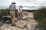 marine iguanas just lying around on the walking path