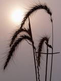+Winter's Sun-Shirley
