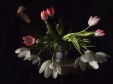 Dying Tulips and Wicker Basket by Jono