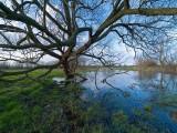 Thames in Flood 3 original by Bruce Clarke