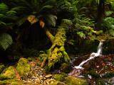 Mossy log by Dennis
