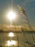 Sun and wheat