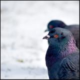birds eye view - charlie