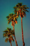 Tres Palms 01 by Paul Wear