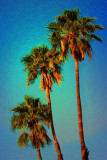 Tres Palms 02 by Paul Wear