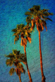Tres Palms 03 by Paul Wear