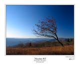 Mountain Ash 1.jpg
