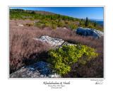 Rhododendron  Heath.jpg