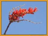 November bloom