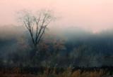 Foggy Montezuma Morning