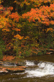 Color along Chittenango Creek