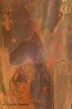 Yew Bark 2
