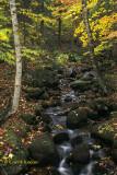 Mossy Adirondack Stream
