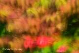 Viburnum and Roses