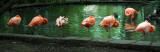 Non-Conforming Flamingo