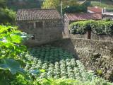 Adega and garden