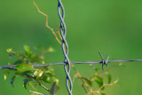 Barbwire and Weeds