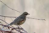 6. Swallows through Starlings