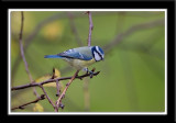 Small Birds 2007