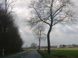 Jumpy tree