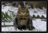 bob snow2.jpg