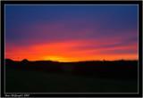 lizard sunset.jpg