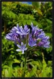 Nice purple flower.