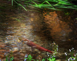 salmon_1526.jpg