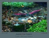 salmon_2998.jpg