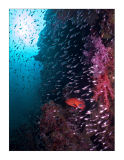 Red grouper in the dark
