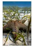 One More Starfish in Nacala