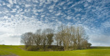 Trees near Molash, Kent, UK
