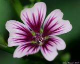 unknown wild flower