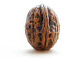 walnut (2).jpg