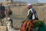 Camel RiderAt Khafre Alfalfa Feed On Saddle