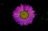 _DSC3195asubxy1k2.jpg