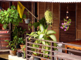 Veranda with plants